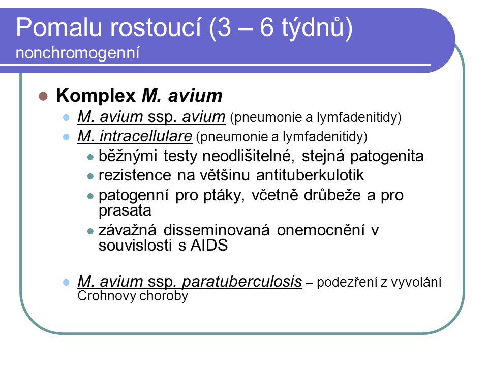 Pomalu rostoucí (3 – 6 týdnů) nonchromogenní Komplex M. avium M. avium ssp. avium (pneumonie a lymfadenitidy) M. intracellulare (pneumonie a lymfadeni
