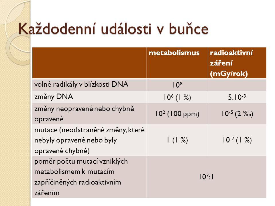 Každodenní události v buňce metabolismus radioaktivní záření (mGy/rok) volné radikály v blízkosti DNA 10 8 změny DNA 10 6 (1 %)5.10 -3 změny neopraven