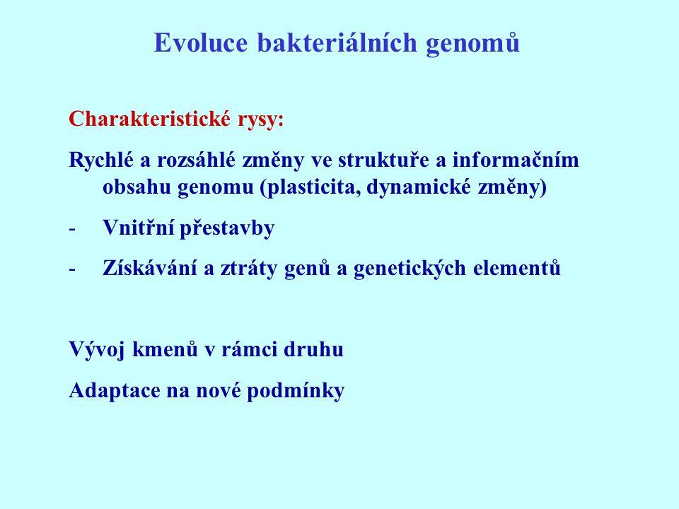Evoluce bakteriálních genomů Charakteristické rysy: Rychlé a rozsáhlé změny ve struktuře a informačním obsahu genomu (plasticita, dynamické změny) -Vn