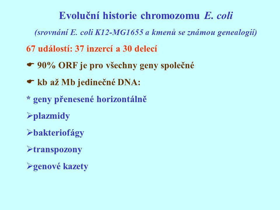 Evoluční historie chromozomu E. coli (srovnání E. coli K12-MG1655 a kmenů se známou genealogií) 67 událostí: 37 inzercí a 30 delecí  90% ORF je pro v