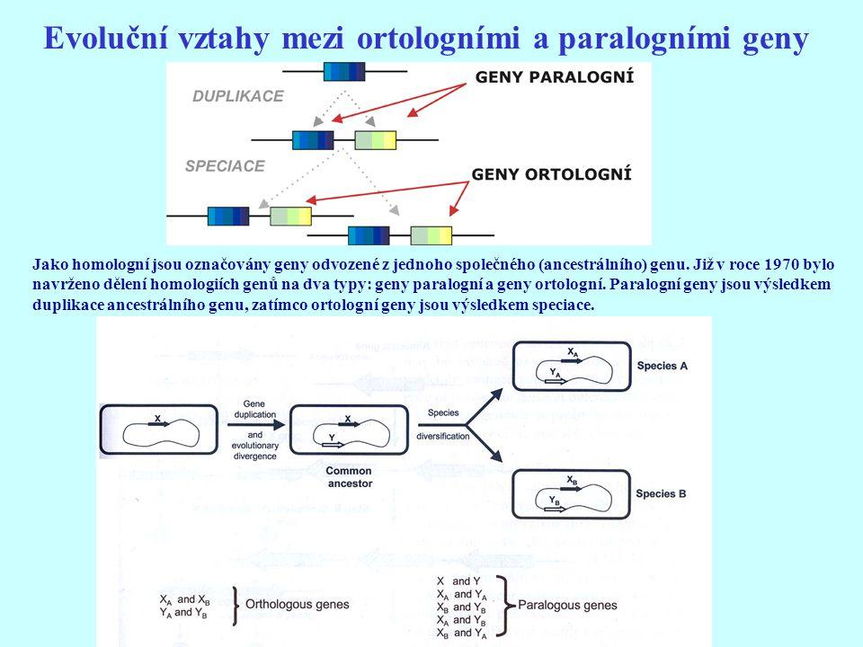 Evoluční vztahy mezi ortologními a paralogními geny Jako homologní jsou označovány geny odvozené z jednoho společného (ancestrálního) genu. Již v roce