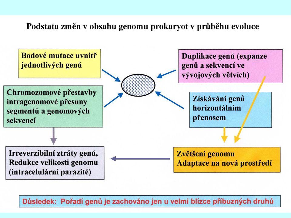 Mechanismy evoluce bakteriálních genomů transformace získávání genů HGT bakteriální genom Udržování genů poskytujících selekční výhody plazmid fágy Aditivní evoluce Reduktivní evoluce Fágy, plazmidy, IS, Tn, PAI genové duplikace, přestavby inaktivace genů, psedogeny ztráta genů Procesy získávání a pozměňování genových funkcí Ztráty genových funkcí vnitřními mechanismy rekombinace, delece