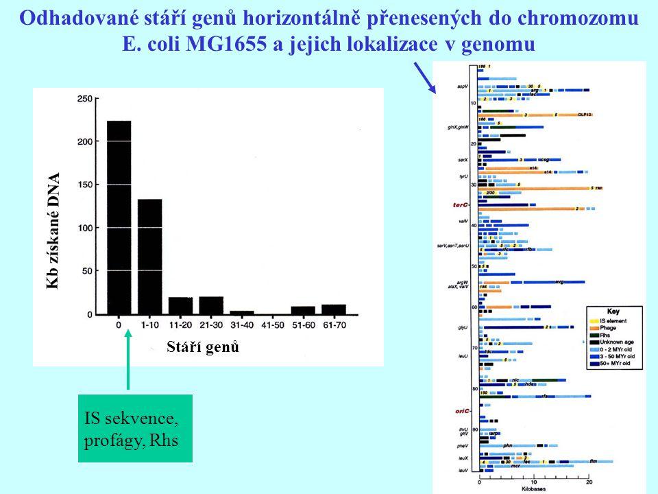 Odhadované stáří genů horizontálně přenesených do chromozomu E. coli MG1655 a jejich lokalizace v genomu IS sekvence, profágy, Rhs Stáří genů Kb získa