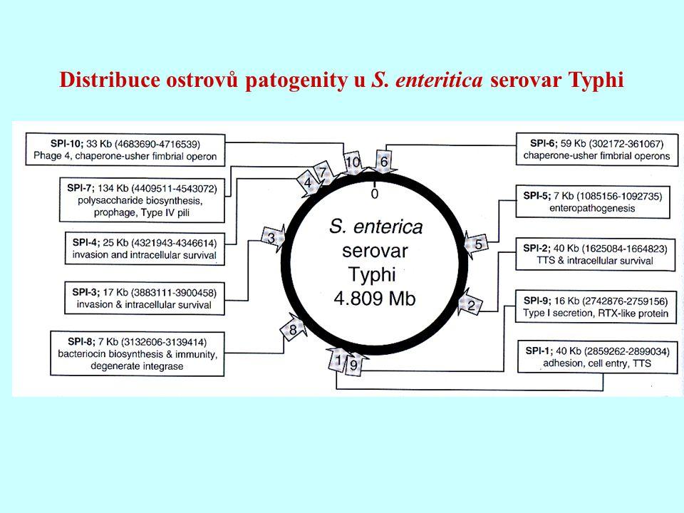 Distribuce ostrovů patogenity u S. enteritica serovar Typhi