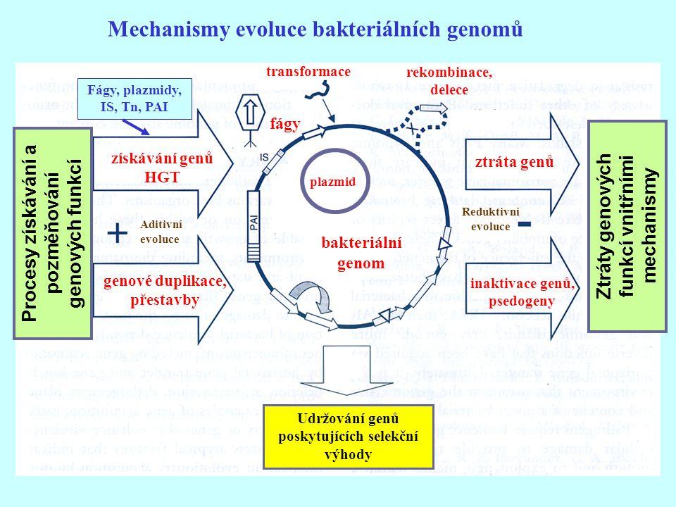 Mechanismy evoluce bakteriálních genomů transformace získávání genů HGT bakteriální genom Udržování genů poskytujících selekční výhody plazmid fágy Ad