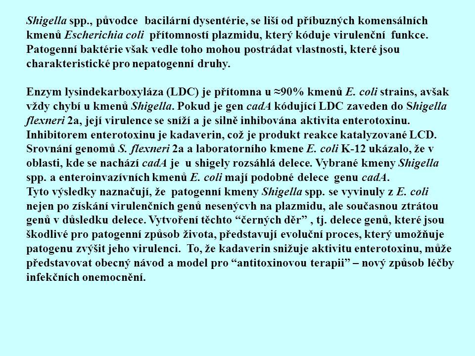 Shigella spp., původce bacilární dysentérie, se liší od příbuzných komensálních kmenů Escherichia coli přítomností plazmidu, který kóduje virulenční f