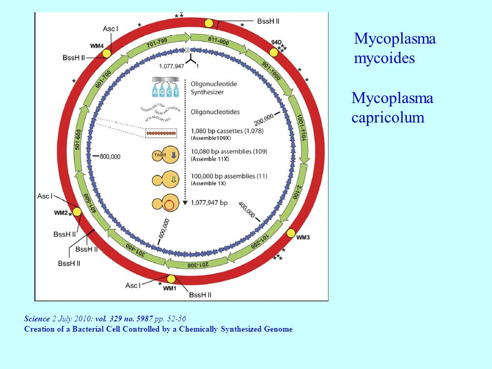 Mycoplasma mycoides Mycoplasma capricolum Science 2 July 2010: vol.