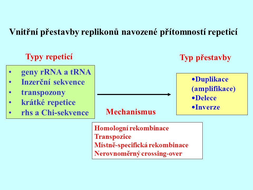 Vnitřní přestavby replikonů navozené přítomností repeticí  Duplikace (amplifikace)  Delece  Inverze Typ přestavby Typy repeticí geny rRNA a tRNA In