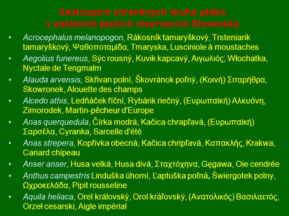 Acrocephalus melanopogon, Rákosník tamaryškový, Trsteniarik tamaryškový, Ψαθοποταμίδα, Tmaryska, Lusciniole à moustaches Aegolius funereus, Sýc rousný