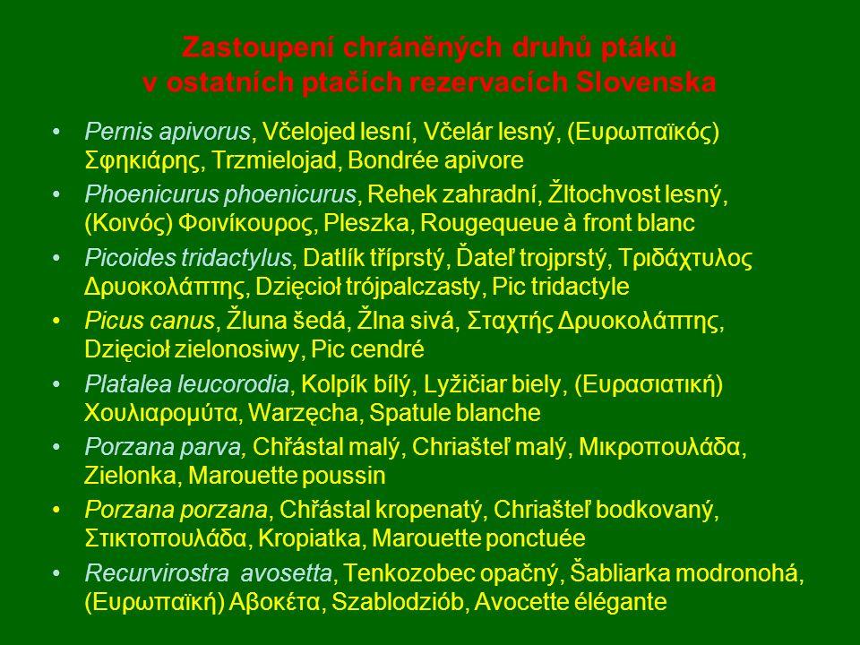 Pernis apivorus, Včelojed lesní, Včelár lesný, (Ευρωπαϊκός) Σφηκιάρης, Trzmielojad, Bondrée apivore Phoenicurus phoenicurus, Rehek zahradní, Žltochvos