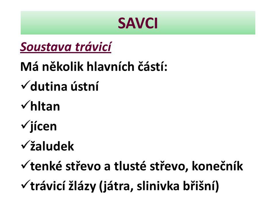 SAVCI Soustava trávicí Má několik hlavních částí: dutina ústní hltan jícen žaludek tenké střevo a tlusté střevo, konečník trávicí žlázy (játra, sliniv