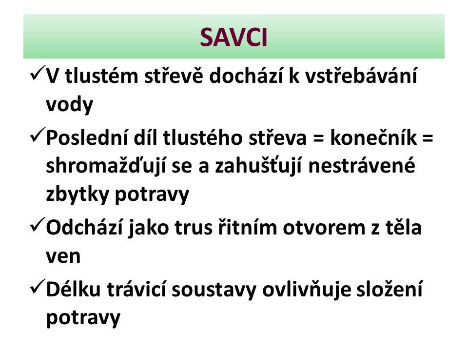 SAVCI Pes domácí a jiní masožravci mají střevo poměrně krátké U býložravců je mnohem delší, protože rostlinná potrava je hůře stravitelná