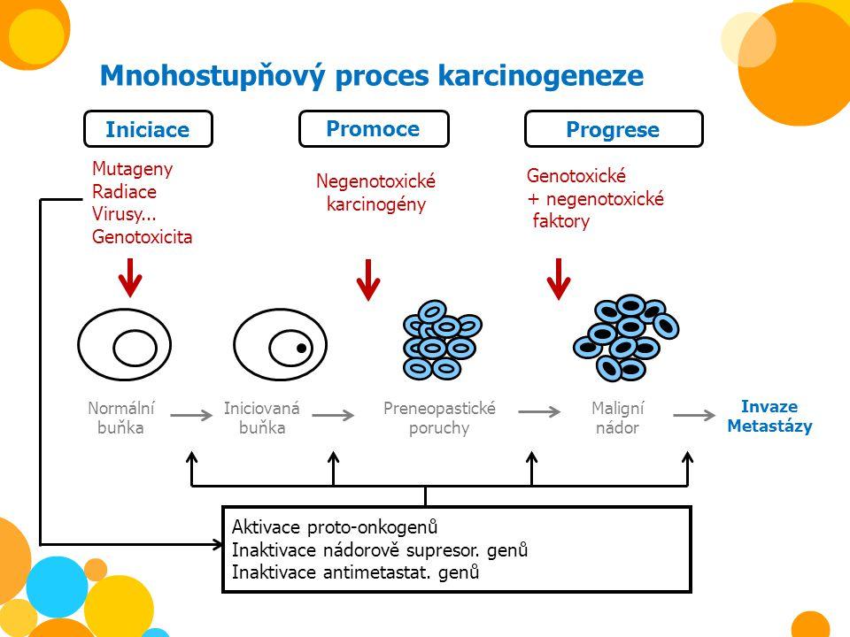 Mnohostupňový proces karcinogeneze Iniciace Promoce Progrese Mutageny Radiace Virusy... Genotoxicita Negenotoxické karcinogény Preneopastické poruchy
