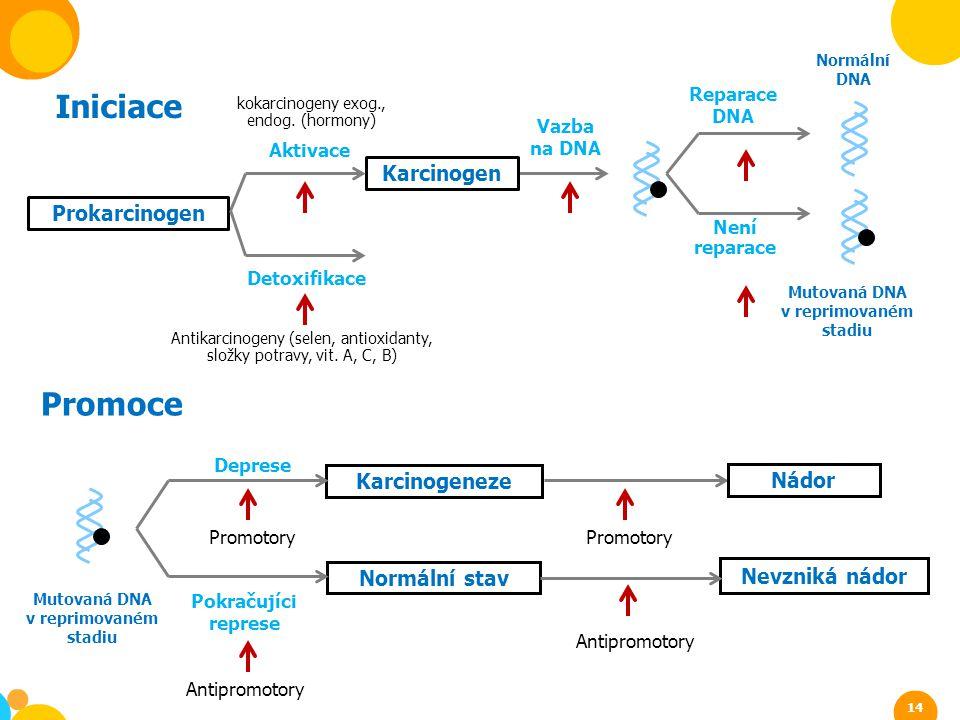 kokarcinogeny exog., endog. (hormony) Iniciace Antikarcinogeny (selen, antioxidanty, složky potravy, vit. A, C, B) Karcinogen Prokarcinogen Aktivace D
