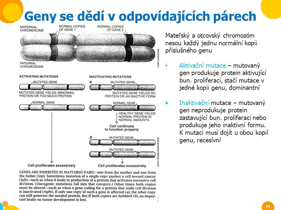 Mateřský a otcovský chromozóm nesou každý jednu normální kopii příslušného genu Aktivační mutace – mutovaný gen produkuje protein aktivující bun. prol
