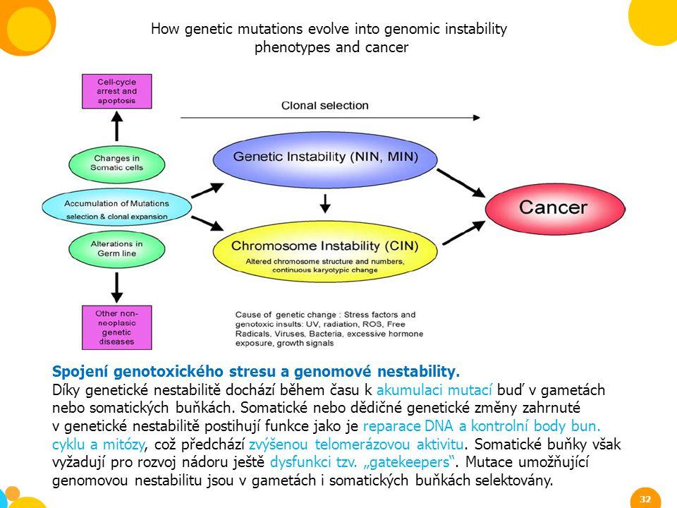 Spojení genotoxického stresu a genomové nestability. Díky genetické nestabilitě dochází během času k akumulaci mutací buď v gametách nebo somatických