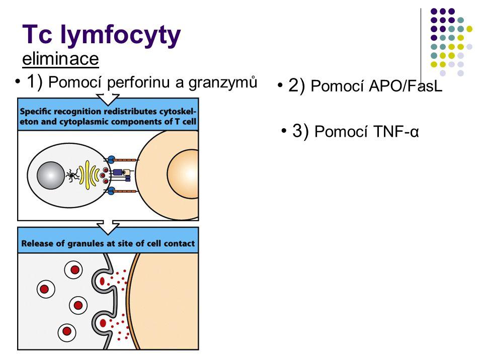Tc lymfocyty eliminace 1) Pomocí perforinu a granzymů 3) Pomocí TNF-α 2) Pomocí APO/FasL