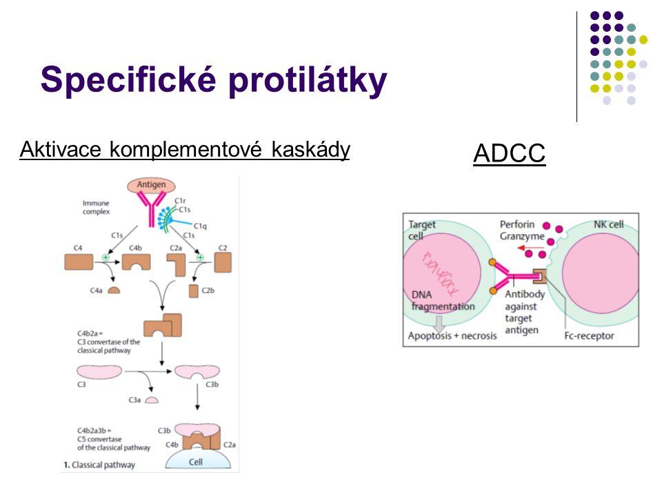 Specifické protilátky Aktivace komplementové kaskády ADCC