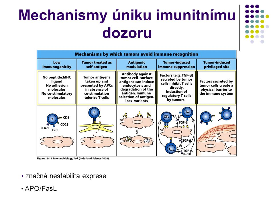 Mechanismy úniku imunitnímu dozoru značná nestabilita exprese APO/FasL