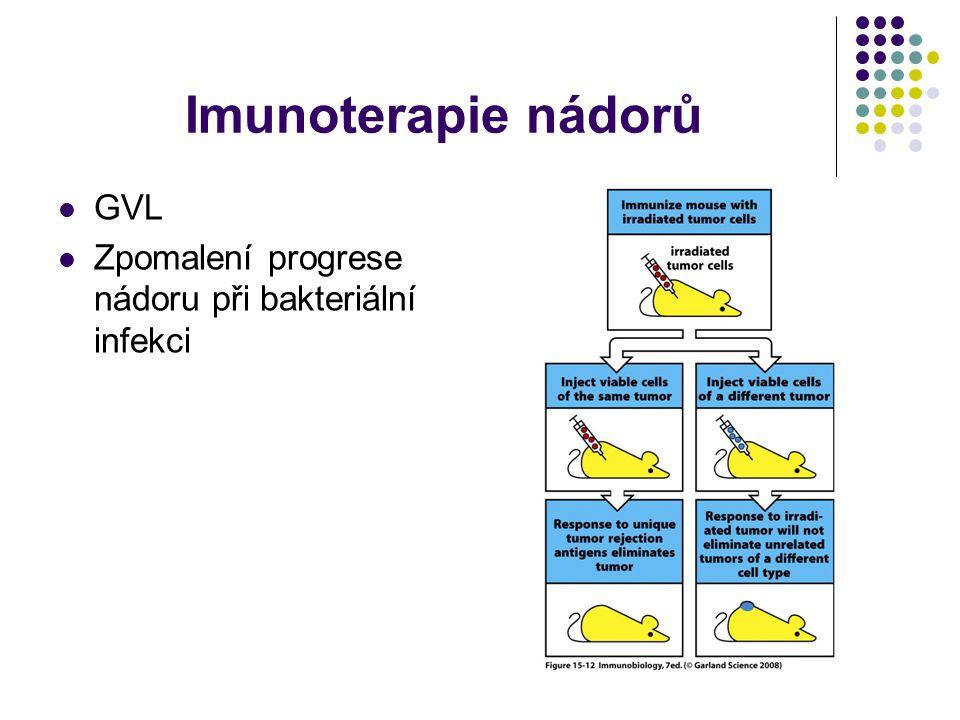 Imunoterapie nádorů GVL Zpomalení progrese nádoru při bakteriální infekci