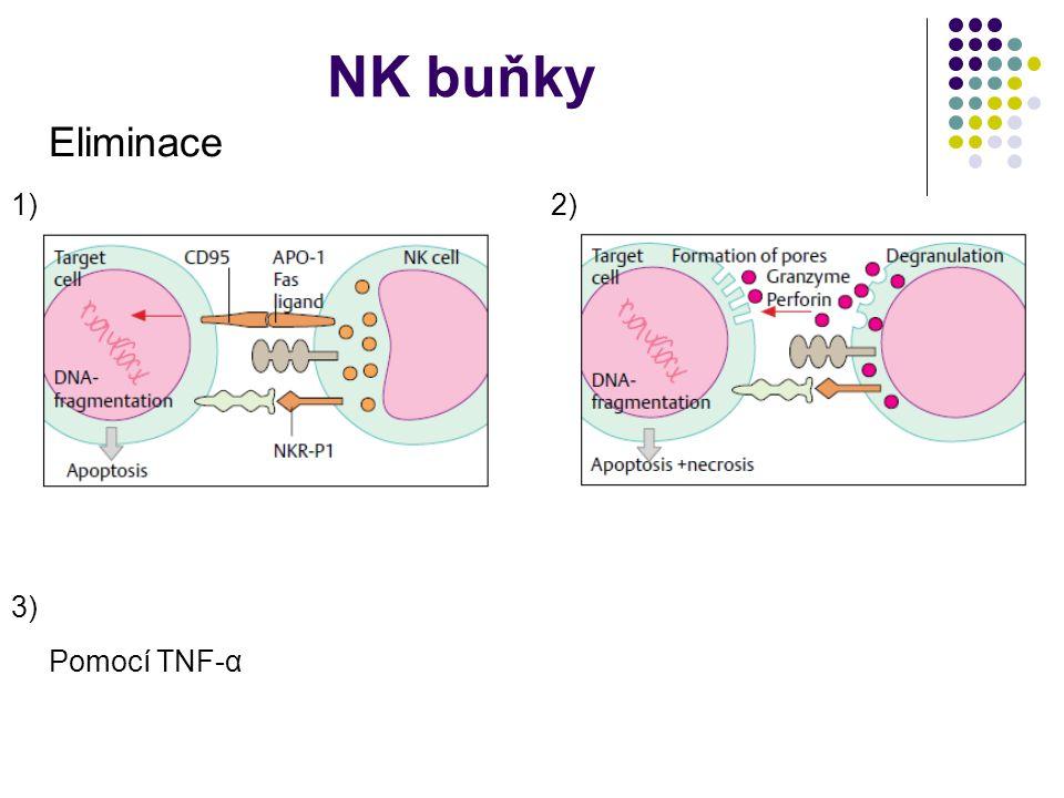 NK buňky Eliminace Pomocí TNF-α 1)2) 3)