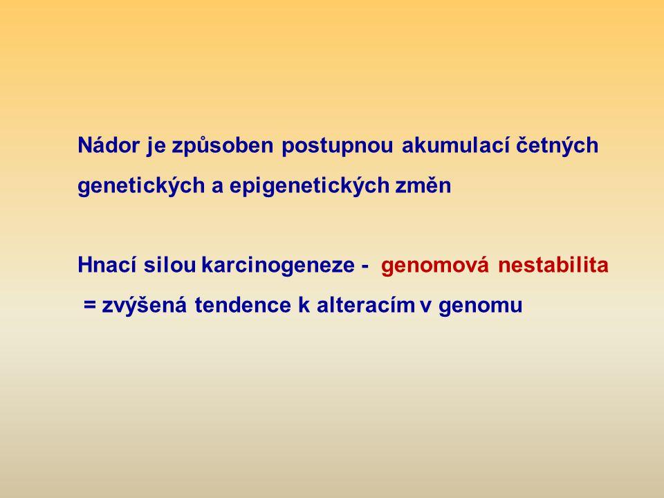 Nádor je způsoben postupnou akumulací četných genetických a epigenetických změn Hnací silou karcinogeneze - genomová nestabilita = zvýšená tendence k alteracím v genomu