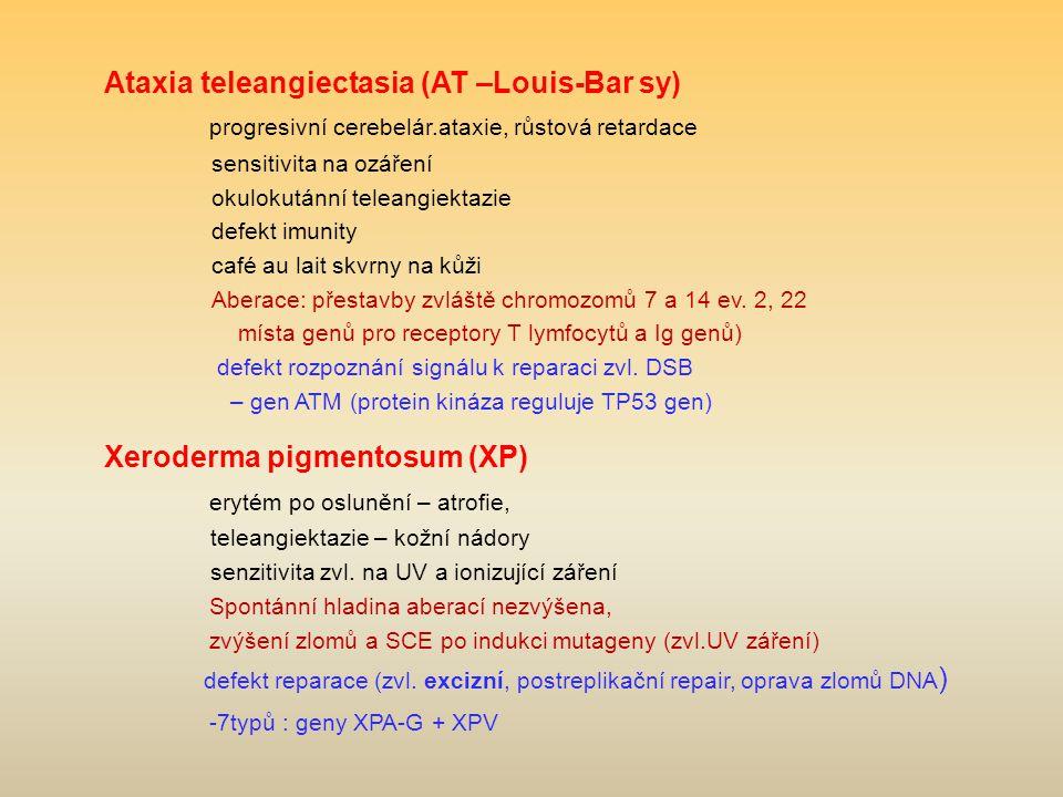 Ataxia teleangiectasia (AT –Louis-Bar sy) progresivní cerebelár.ataxie, růstová retardace sensitivita na ozáření okulokutánní teleangiektazie defekt imunity café au lait skvrny na kůži Aberace: přestavby zvláště chromozomů 7 a 14 ev.