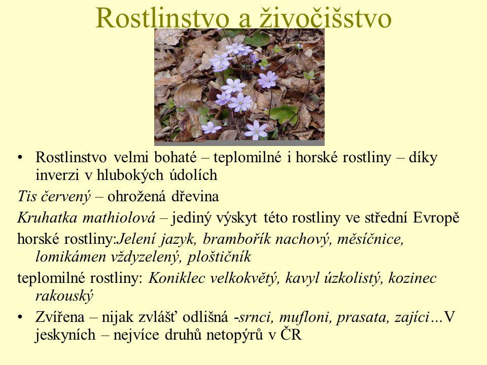 Rostlinstvo a živočišstvo Rostlinstvo velmi bohaté – teplomilné i horské rostliny – díky inverzi v hlubokých údolích Tis červený – ohrožená dřevina Kr