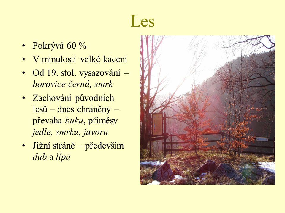 Les Pokrývá 60 % V minulosti velké kácení Od 19. stol. vysazování – borovice černá, smrk Zachování původních lesů – dnes chráněny – převaha buku, přím
