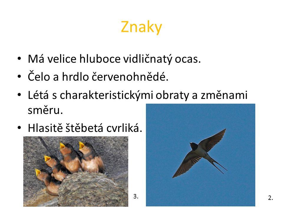 Rozmnožování Do uzavřeného kulovitého hnízda slepeného z jílu snese samička 4 – 5 vajíček.