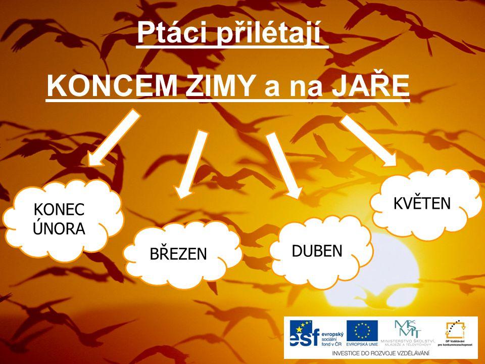 10) Soubor:Erithacus rubecula (Marek Szczepanek).jpg.