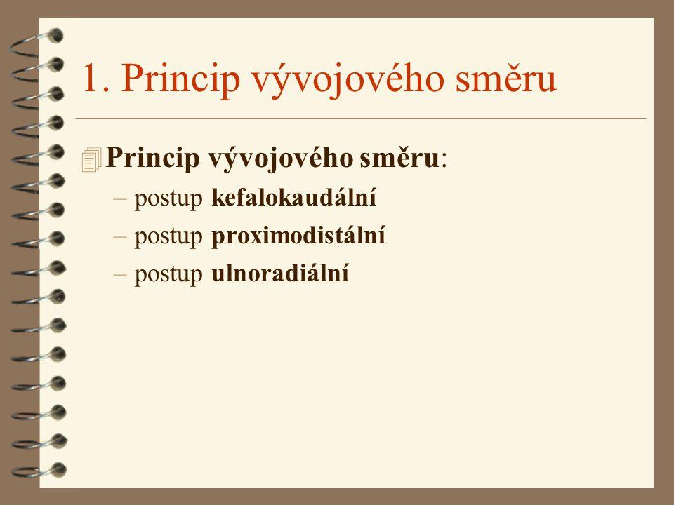 1. Princip vývojového směru 4 Princip vývojového směru: –postup kefalokaudální –postup proximodistální –postup ulnoradiální