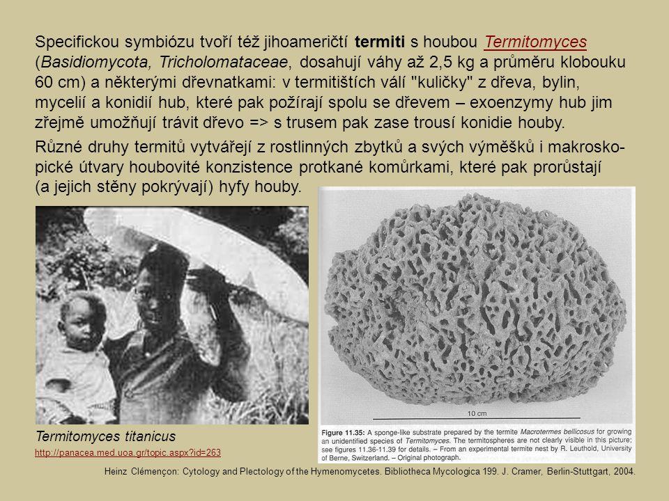 Specifickou symbiózu tvoří též jihoameričtí termiti s houbou Termitomyces (Basidiomycota, Tricholomataceae, dosahují váhy až 2,5 kg a průměru klobouku 60 cm) a některými dřevnatkami: v termitištích válí kuličky z dřeva, bylin, mycelií a konidií hub, které pak požírají spolu se dřevem – exoenzymy hub jim zřejmě umožňují trávit dřevo => s trusem pak zase trousí konidie houby.Termitomyces Různé druhy termitů vytvářejí z rostlinných zbytků a svých výměšků i makrosko- pické útvary houbovité konzistence protkané komůrkami, které pak prorůstají (a jejich stěny pokrývají) hyfy houby.