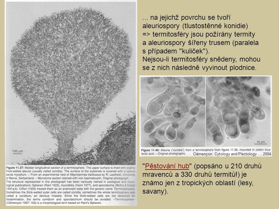 jh... na jejichž povrchu se tvoří aleuriospory (tlustostěnné konidie) => termitosféry jsou požírány termity a aleuriospory šířeny trusem (paralela s p