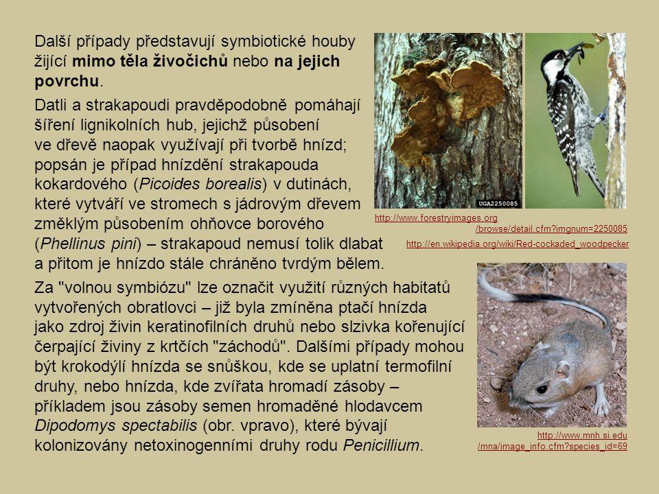 Další případy představují symbiotické houby žijící mimo těla živočichů nebo na jejich povrchu. Datli a strakapoudi pravděpodobně pomáhají šíření ligni