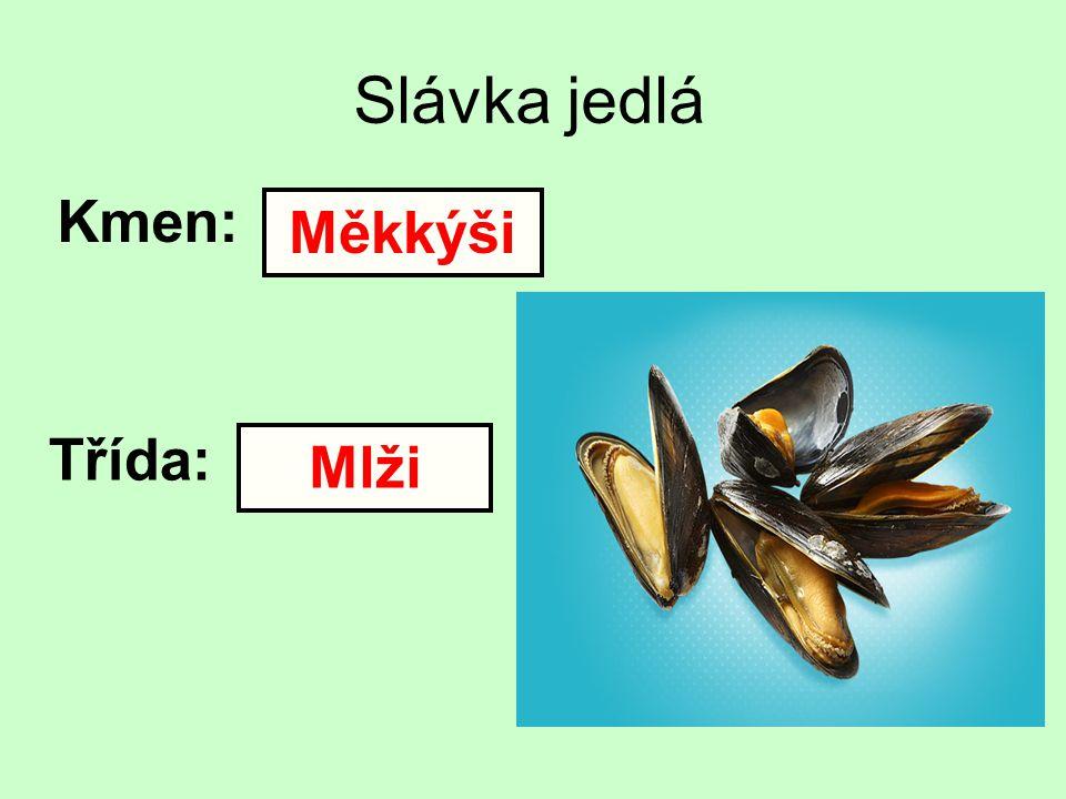 Slávka jedlá Kmen: Třída: Měkkýši Mlži