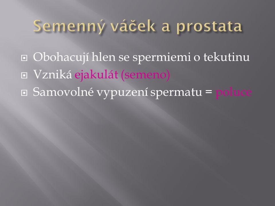  Obohacují hlen se spermiemi o tekutinu  Vzniká ejakulát (semeno)  Samovolné vypuzení spermatu = poluce