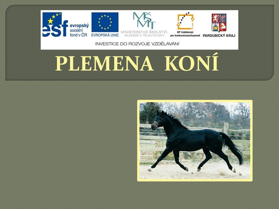 Teplokrevní koně chovaní na bývalém území vytvořili kmeny:  Teplokrevní koně chovaní na bývalém území vytvořili kmeny:  Furioso, Przedswit, Gidran, Star of Hannover, North Star, Nonius, Shagya, které přetrvaly až do dnešní doby.
