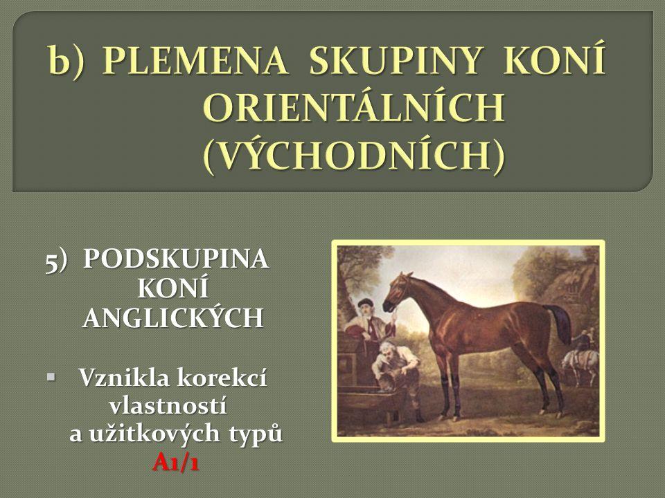 VÝKONNOSTNÍ TYPY:  dělení koní podle výkonnosti, tzn.