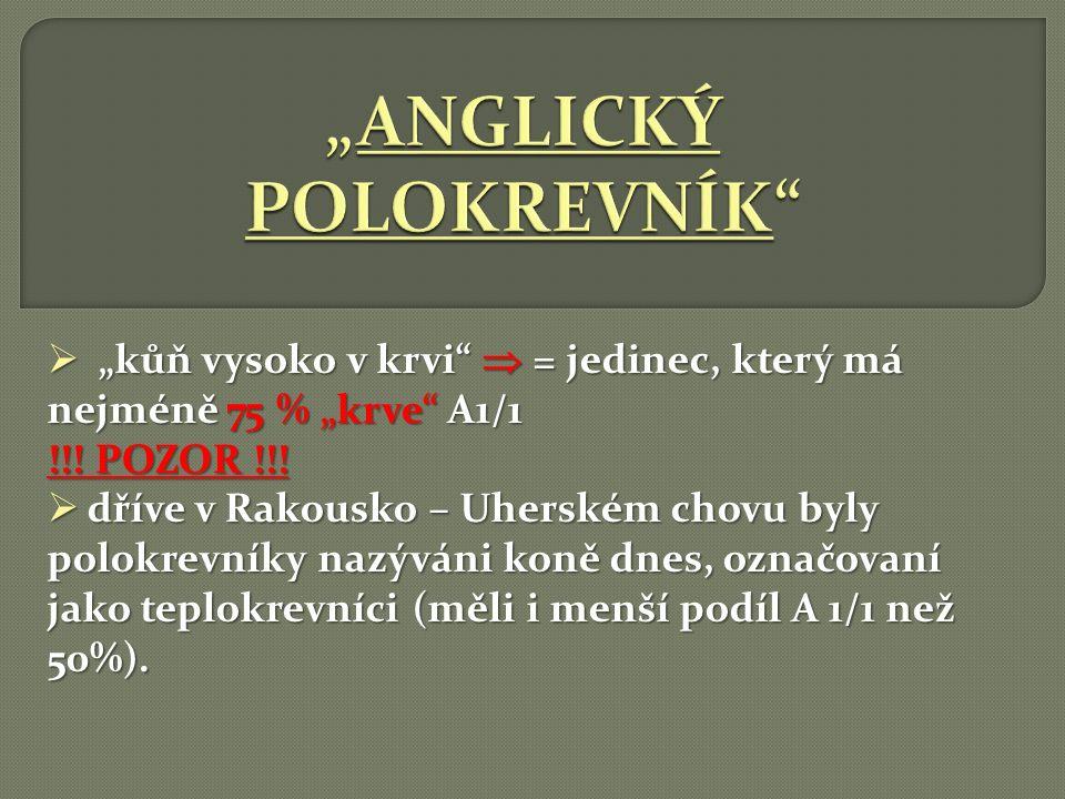 """ """"kůň vysoko v krvi""""  = jedinec, který má nejméně 75 % """"krve"""" A1/1 !!! POZOR !!!  dříve v Rakousko – Uherském chovu byly polokrevníky nazýváni koně"""