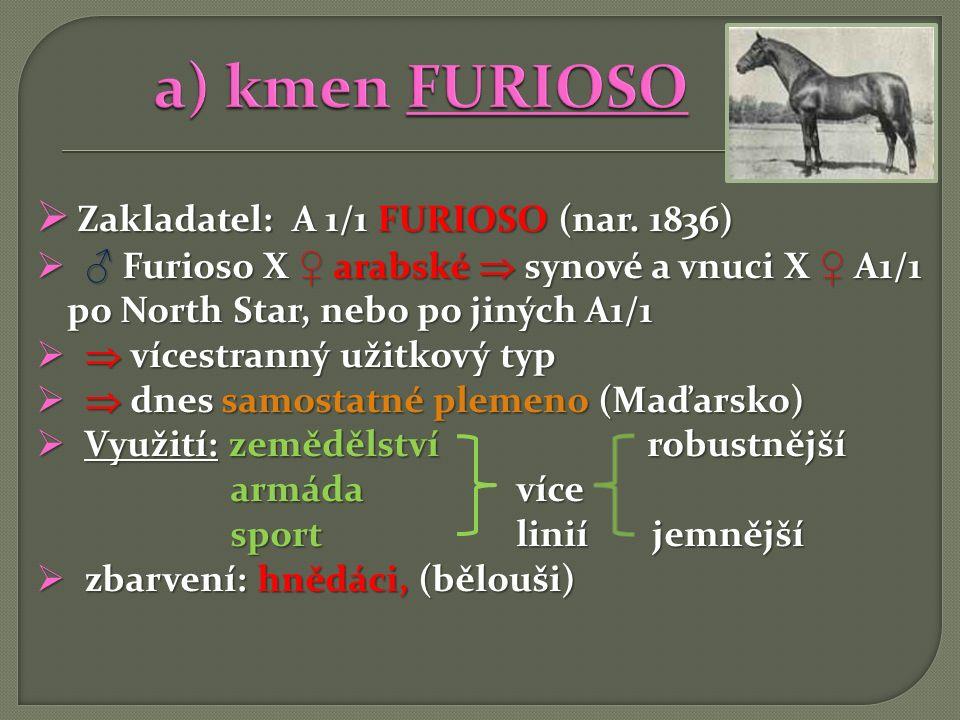  Zakladatel: A 1/1 FURIOSO (nar. 1836)  ♂ Furioso X ♀ arabské  synové a vnuci X ♀ A1/1 po North Star, nebo po jiných A1/1   vícestranný užitkový