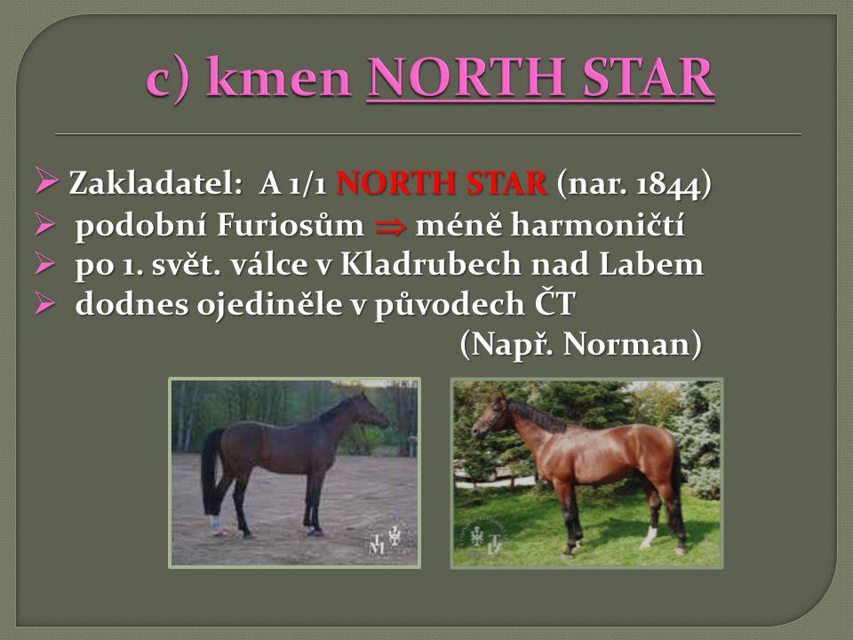  Zakladatel: A 1/1 NORTH STAR (nar. 1844)  podobní Furiosům  méně harmoničtí  po 1. svět. válce v Kladrubech nad Labem  dodnes ojediněle v původe