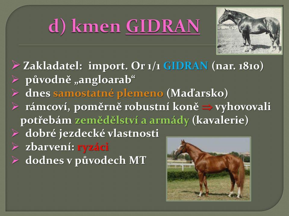 """ Zakladatel: import. Or 1/1 GIDRAN (nar. 1810)  původně """"angloarab""""  dnes samostatné plemeno (Maďarsko)  rámcoví, poměrně robustní koně  vyhovova"""