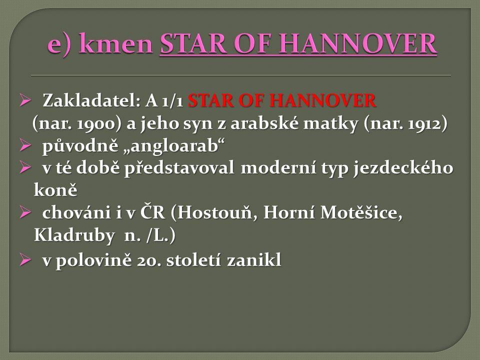 """ Zakladatel: A 1/1 STAR OF HANNOVER (nar. 1900) a jeho syn z arabské matky (nar. 1912) (nar. 1900) a jeho syn z arabské matky (nar. 1912)  původně """""""