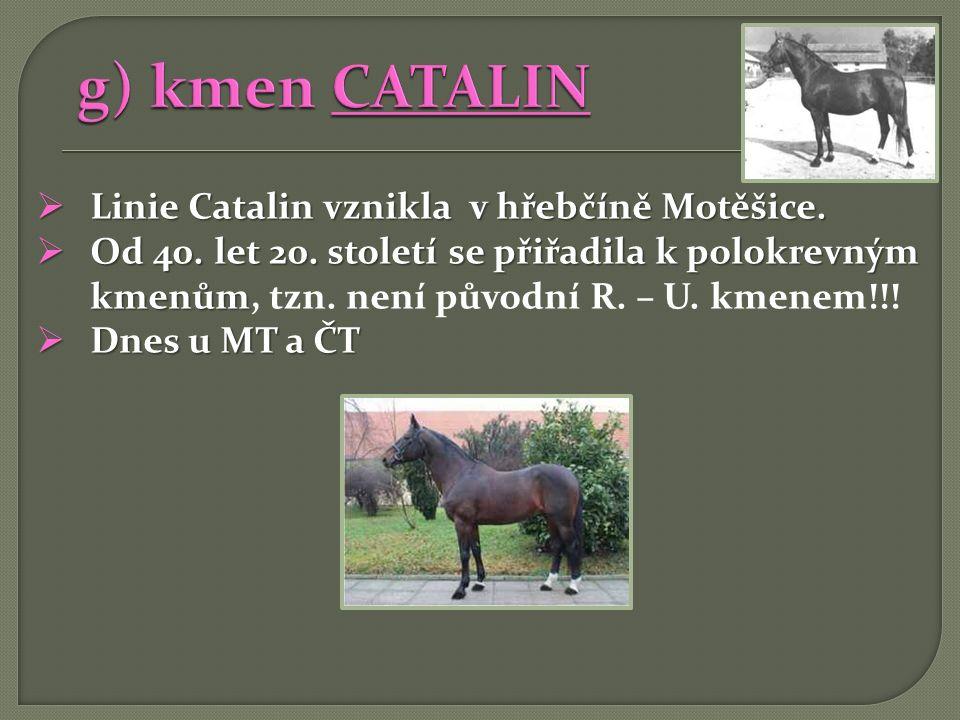  Linie Catalin vznikla v hřebčíně Motěšice.  Od 40. let 20. století se přiřadila k polokrevným kmenům  Od 40. let 20. století se přiřadila k polokr
