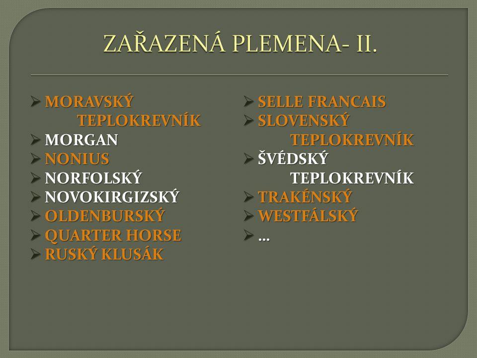 1)SPECIÁLNÍ – ANGLICKÝ PLNOKREVNÍK, AMERICKÝ KLUSÁK, FRANCOUZSKÝ KLUSÁK, RUSKÝ KLUSÁK 2)SPORTOVNÍ – HANNOVERSKÝ, HOLŠTÝNSKÝ, KWPN, OLDENBURSKÝ, SELLE FRANCAIS, WESTFÁLSKÝ, IRSKÝ SPORTOVNÍ KŮŇ,… 3)OSTATNÍ – ANGLOARAB, CLEVELANDSKÝ, ČESKÝ TEPLOKREVNÍK, FURIOSO, HACKNEY, MORGAN, NONIUS, QUARTER HORSE, TRAKÉNSKÝ KŮŇ,…