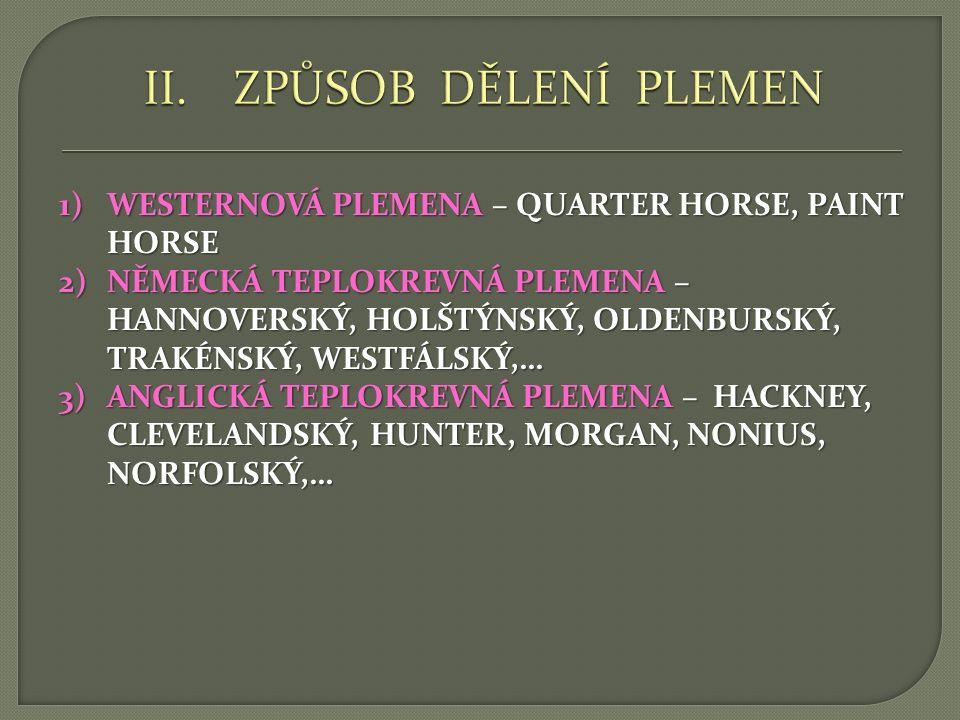 1)WESTERNOVÁ PLEMENA – QUARTER HORSE, PAINT HORSE 2)NĚMECKÁ TEPLOKREVNÁ PLEMENA – HANNOVERSKÝ, HOLŠTÝNSKÝ, OLDENBURSKÝ, TRAKÉNSKÝ, WESTFÁLSKÝ,… 3)ANGL