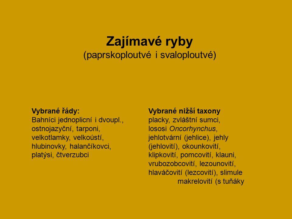 Zajímavé ryby (paprskoploutvé i svaloploutvé) Vybrané řády:Vybrané nižší taxony Bahníci jednoplicní i dvoupl.,placky, zvláštní sumci, ostnojazyční, tarponi, lososi Oncorhynchus, velkotlamky, velkoústí, jehlotvární (jehlice), jehly hlubinovky, halančíkovci, (jehlovití), okounkovití, platýsi, čtverzubci klipkovití, pomcovití, klauni, vrubozobcovití, lezounovití, hlaváčovití (lezcovití), slimule makrelovití (s tuňáky