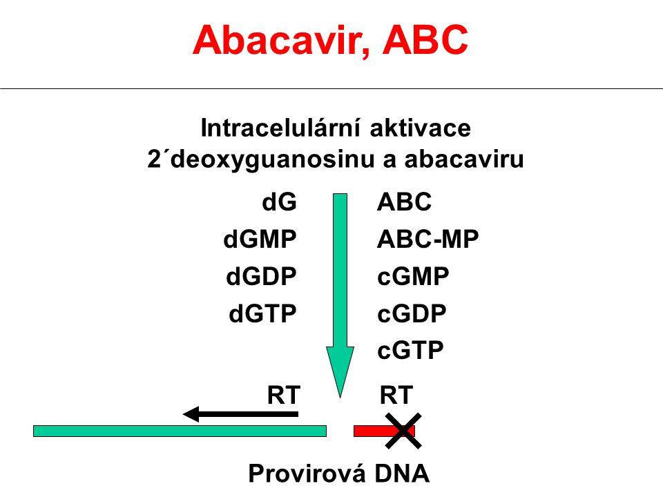 Abacavir, ABC Intracelulární aktivace 2´deoxyguanosinu a abacaviru dG dGMP dGDP dGTP ABC ABC-MP cGMP cGDP cGTP Provirová DNA RT