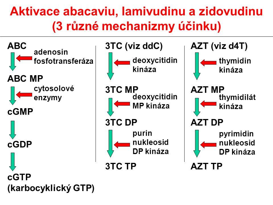 Aktivace abacaviu, lamivudinu a zidovudinu (3 různé mechanizmy účinku) ABC ABC MP cGMP cGDP cGTP (karbocyklický GTP) 3TC (viz ddC) 3TC MP 3TC DP 3TC T
